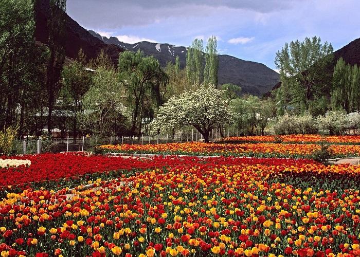 باغ لاله های گچسر