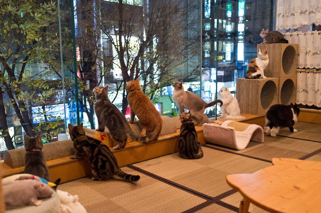 کافه حیوانات در ژاپن