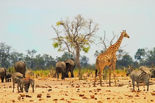 نگاهی به سافاری در افریقا