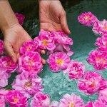 گلابگیری کاشان؛ جشنی با قدمت هزار ساله