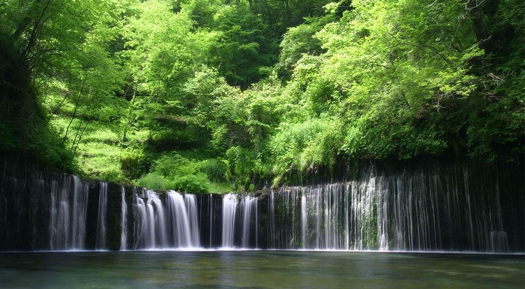 هشت جنگل بارانی معروف دنیا که حتماً باید ببینید