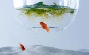 تنگ ماهی- طراحی داخلی-دیزاین-دیزاین خانه