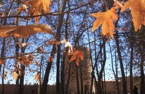 باغ ایرانی-باغ پهلوان پور-باغ پهلوان پور یزد-مهریز-آثار باستانی یزد-مناطق ردشگری یزد
