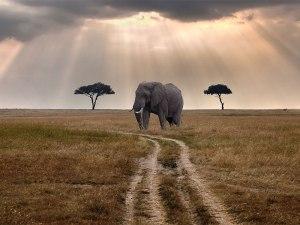 سافاری-آفریقا-سفر-سفر به آفریقا-سافاری آفریقا-جاذبه توریستی آفریقا-گردشگری آفریقا