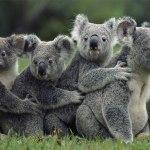 پنج نکته ی جالب در مورد استرالیا
