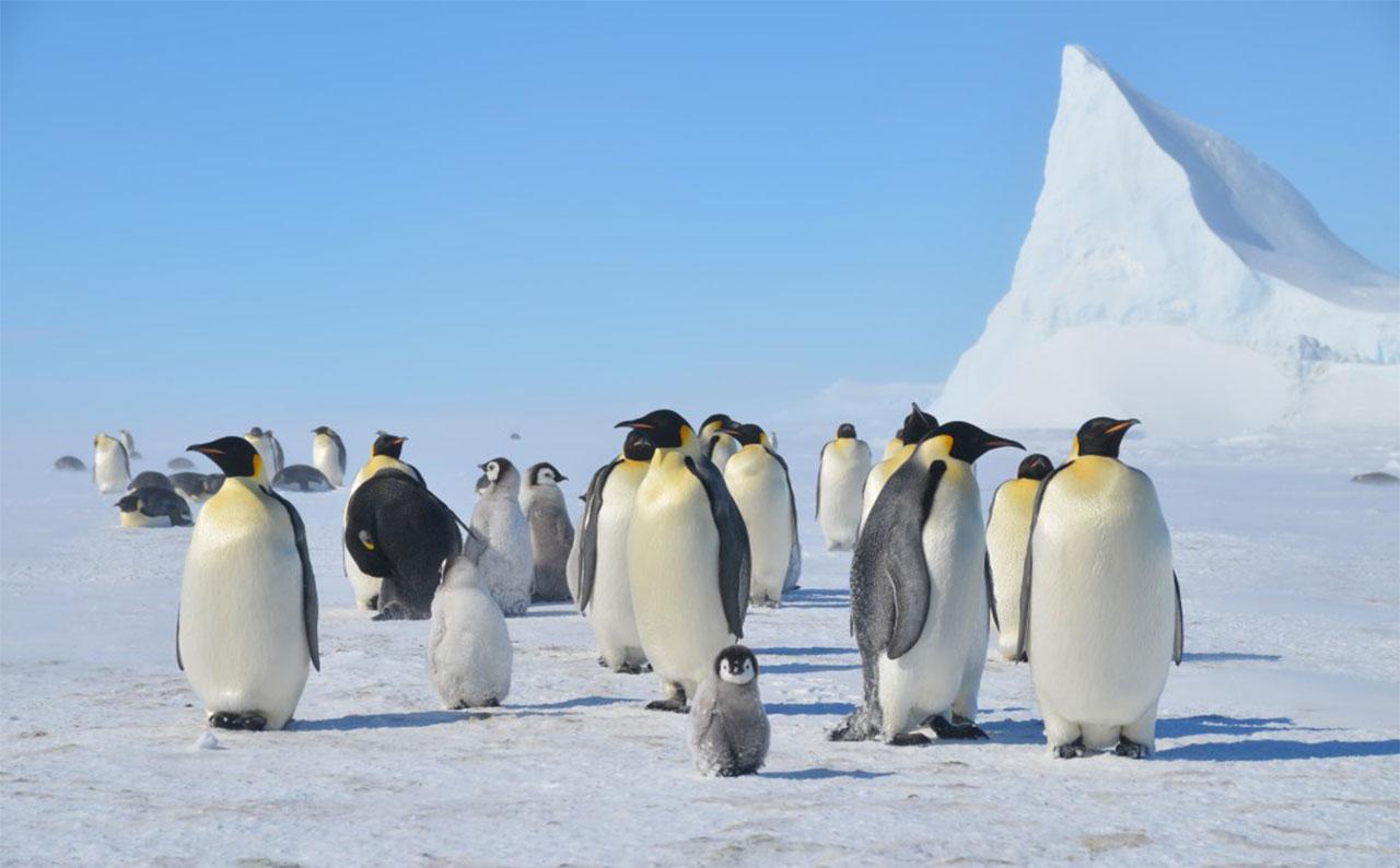 گردشگری قطب جنوب - مارامبیوی آرژانتین - بوینس آیرس - هواپیماهای توربوپراپ