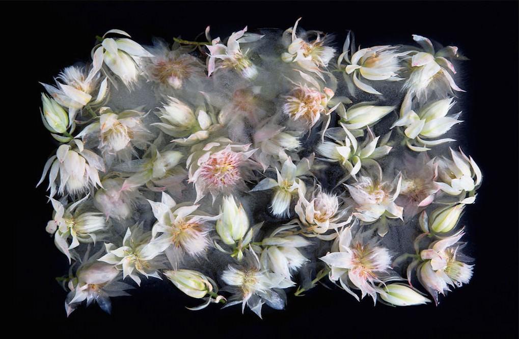 عکاسی از گل های یخ زده