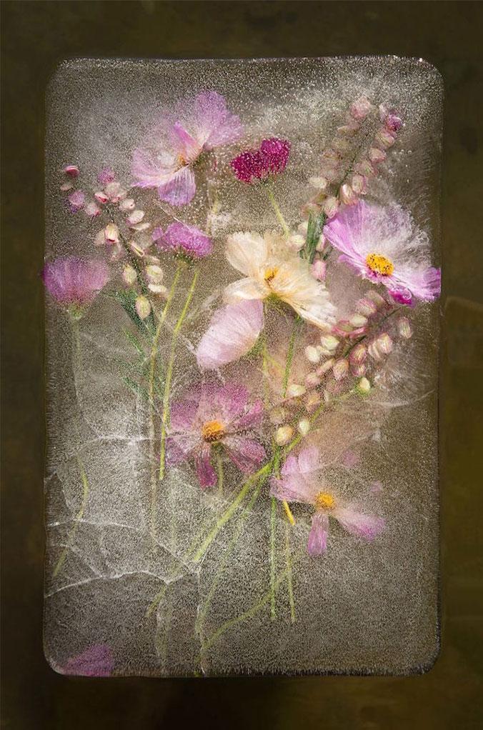 frozen-flowers - عکاسی از گل های یخ زده