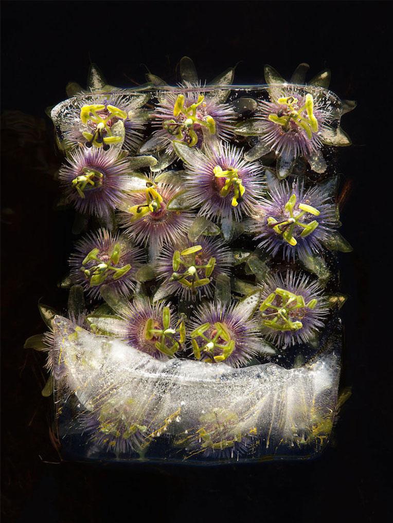 frozen-flowers - تصویر گل های یخ زده