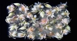 frozen-flowers