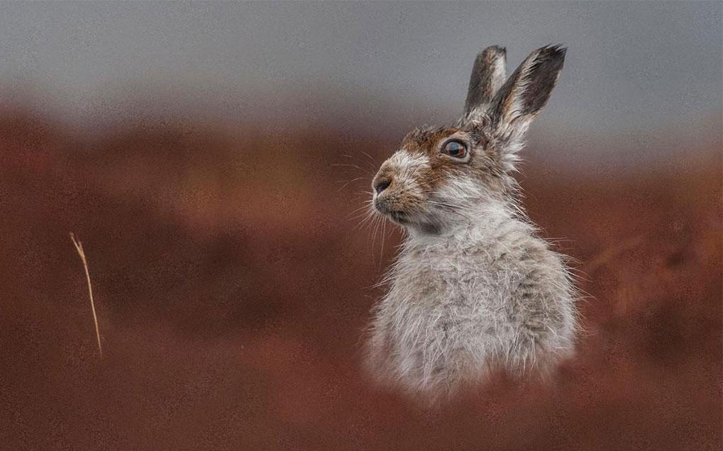 مسابقات عکاسی از حیات وحش