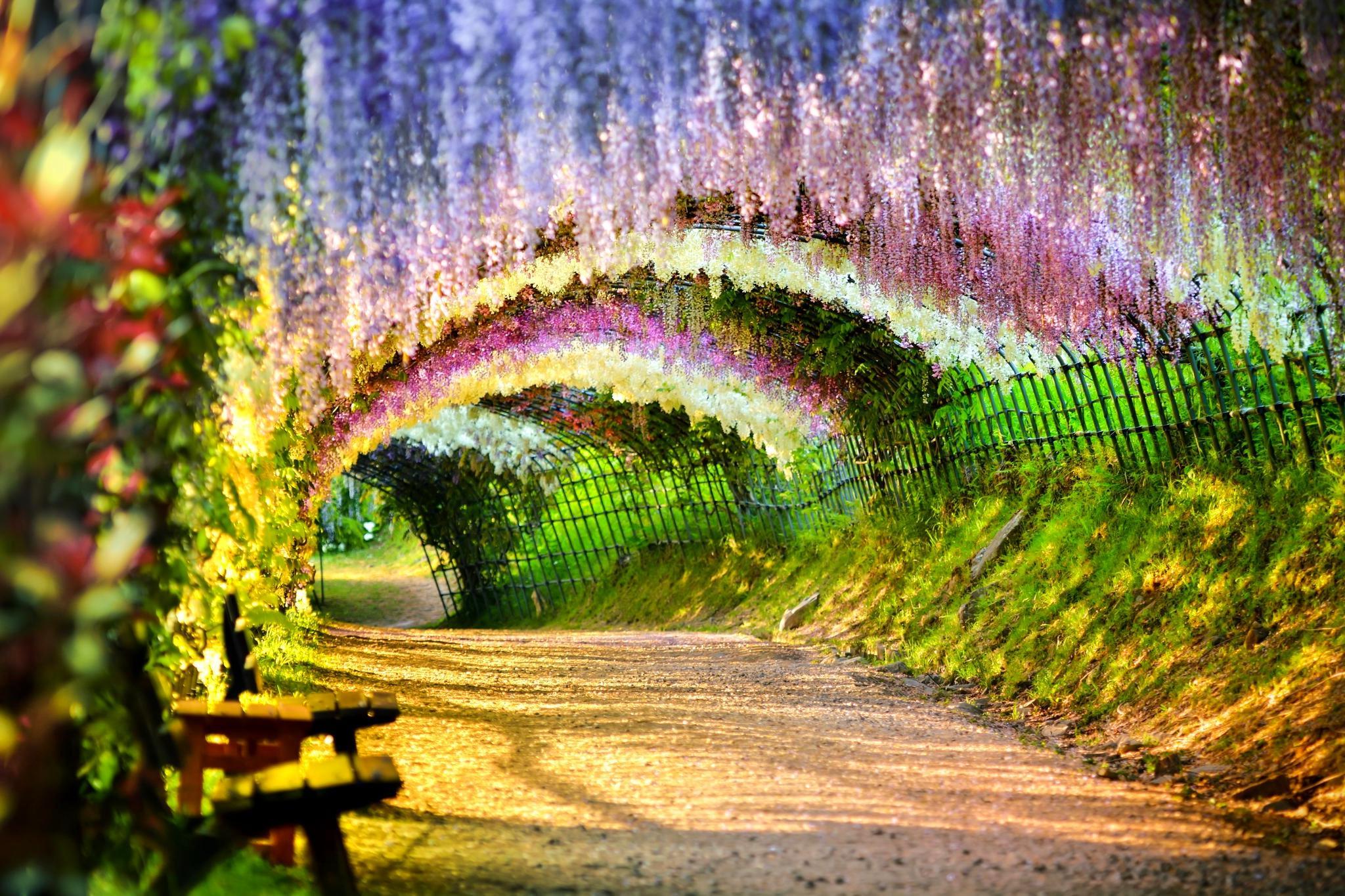 تونل ویستریا در ژاپن