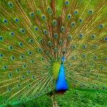 باغ پرندگان کوالالامپور؛ بزرگترین باغ پرندگان جهان