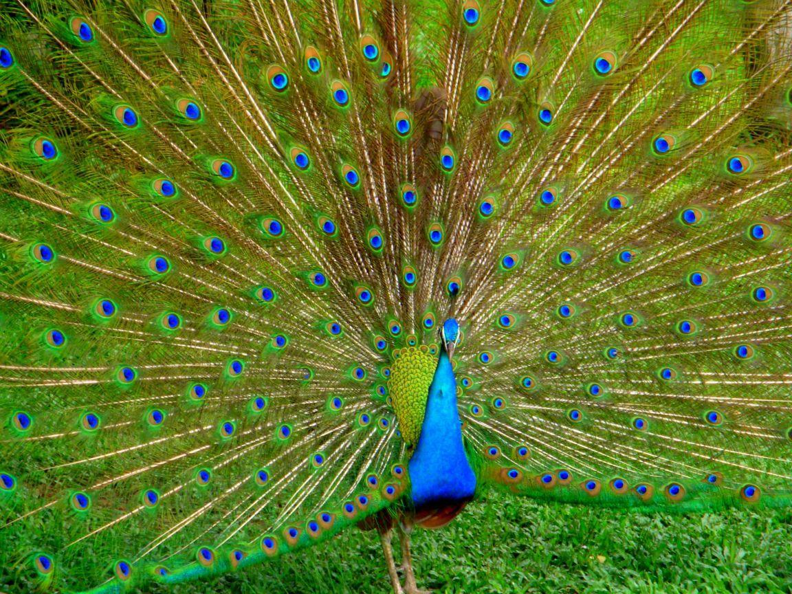 باغ پرندگان کوالالامپور بزرگترین باغ پرندگان جهان