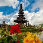 رازهایی شگفت انگیز درباره ی بالی