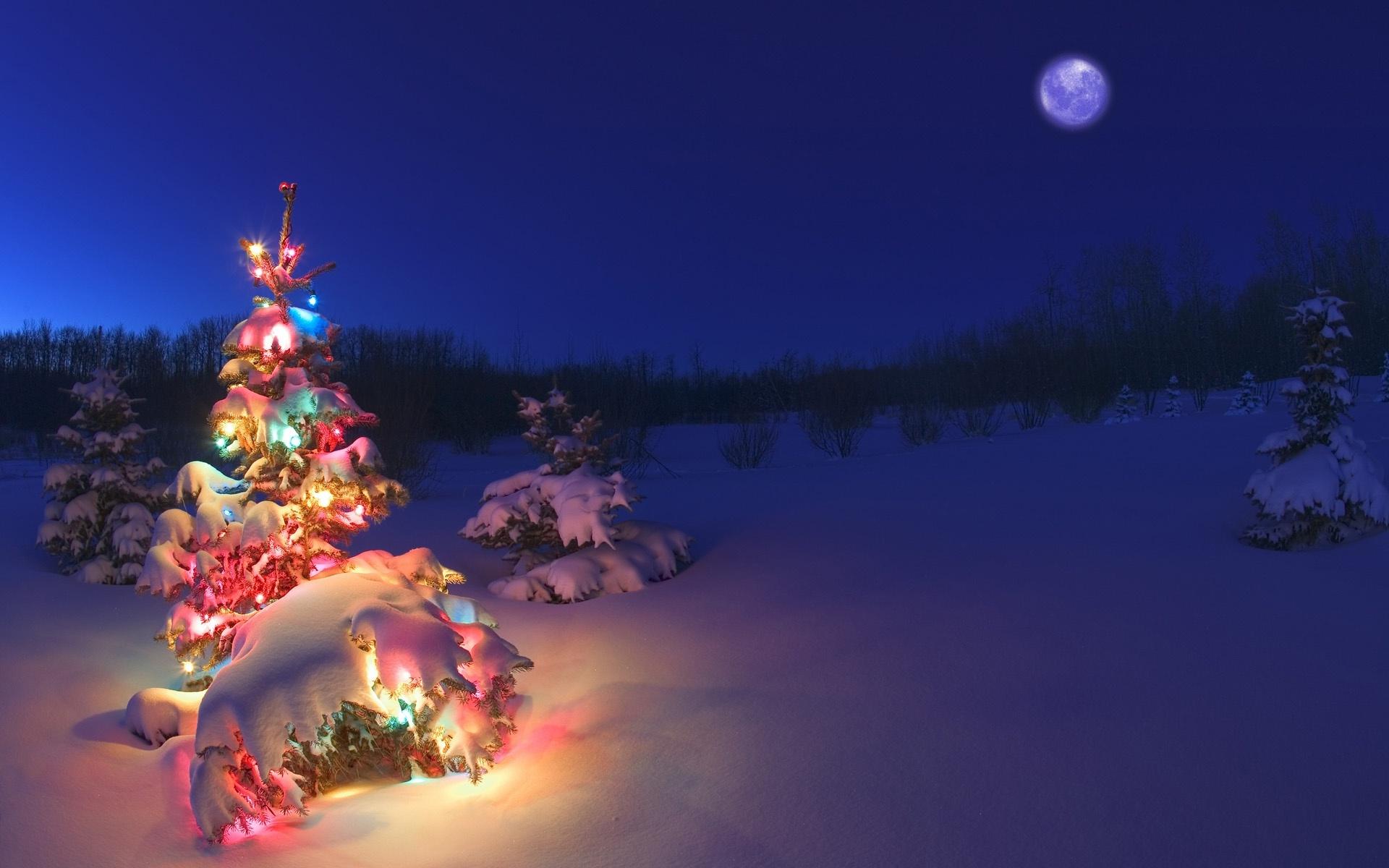 تاریخچه درخت کریسمس
