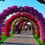 باغ معجزه دبی، زیباترین مقصد بهاری