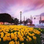 چرا باید در فصل بهار به ترکیه سفر کنیم؟