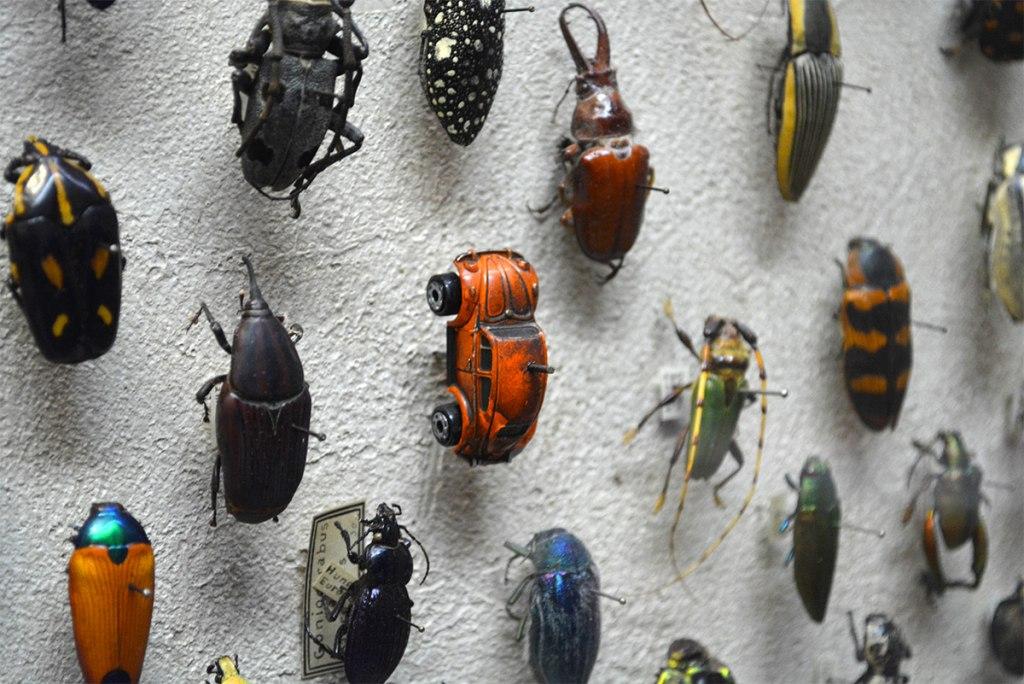 موزه سوسک