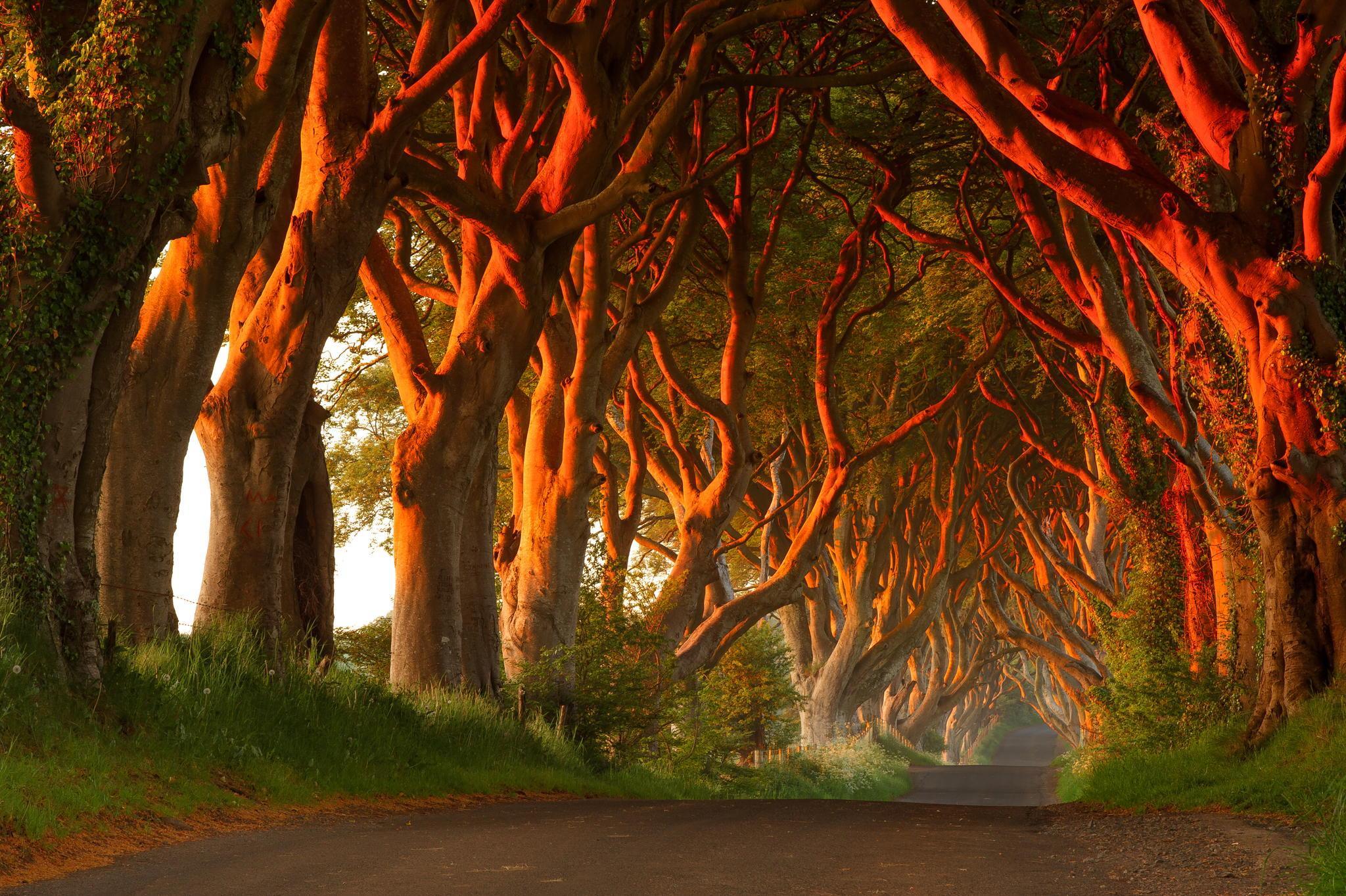 زیباترین خیابان ها
