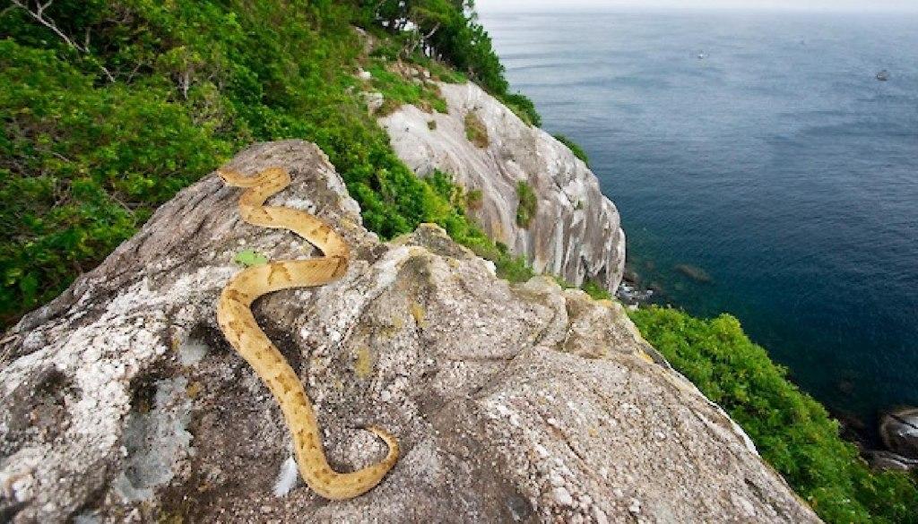 جزیره مار در برزیل