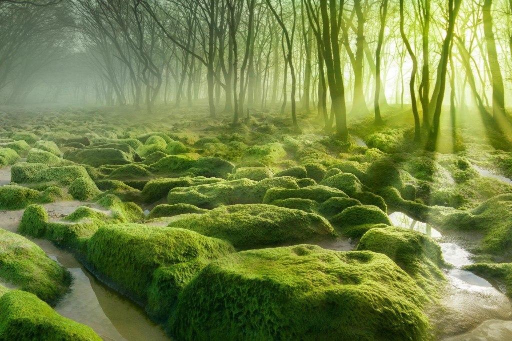 جنگل های وهم انگیز و مرموز در جهان