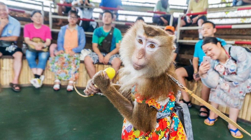 چه تفریحاتی می توان در بازار شناور تایلند انجام داد؟