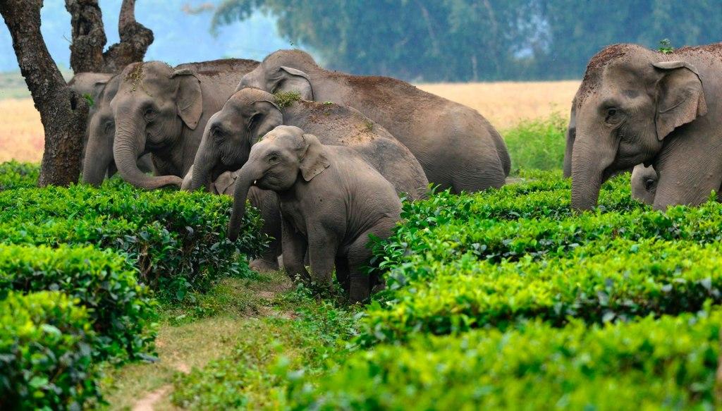 با ساحل عاج کشور فیل ها آشنا شوید !