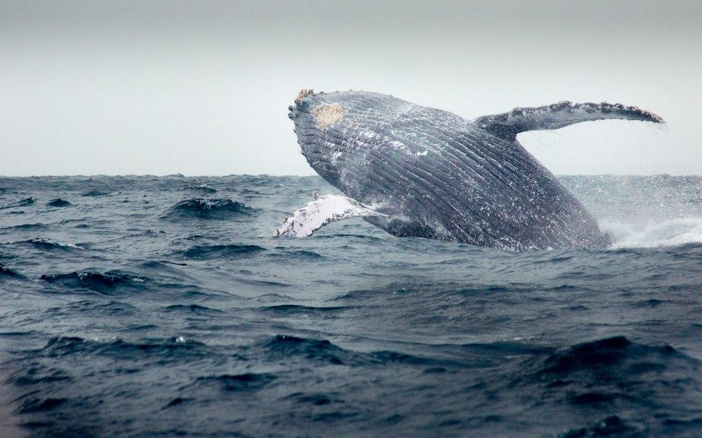 نگاه کردن به نهنگ ها