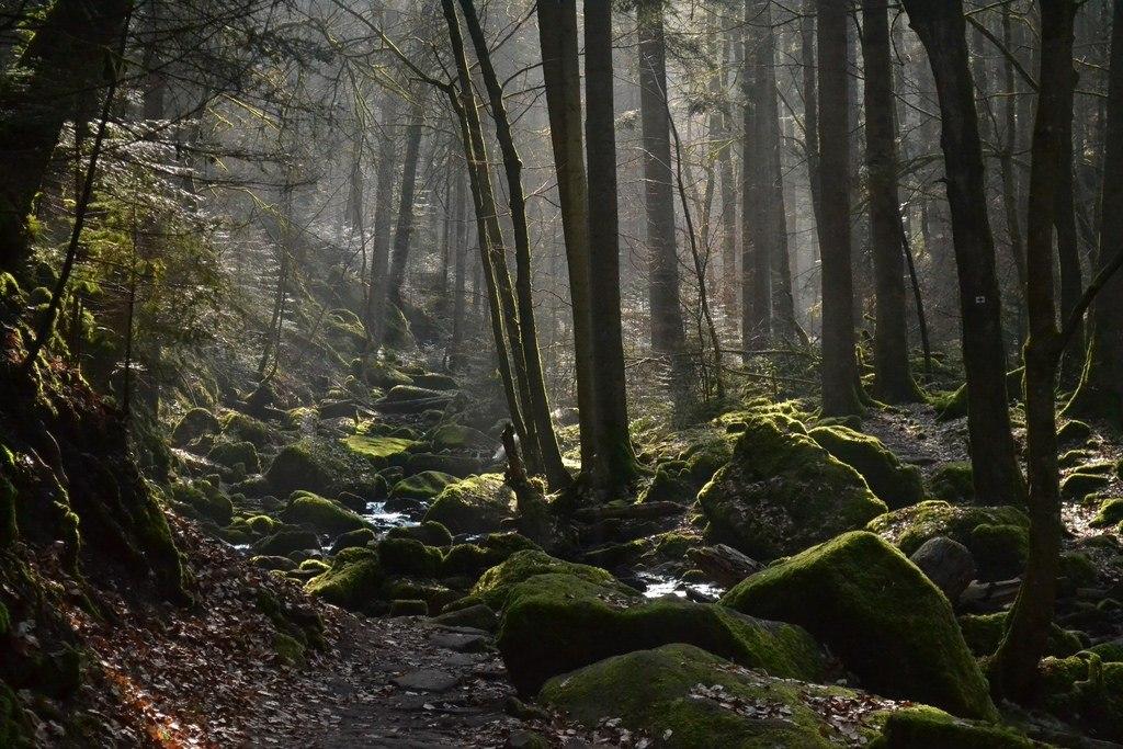 جنگل های وهم انگیز و مرموز در جهان {hendevaneh.com}{سایتهندوانه}جنگل های وهم انگیز و مرموز در جهان - Black Forest 1 1024x683 - جنگل های وهم انگیز و مرموز در جهان