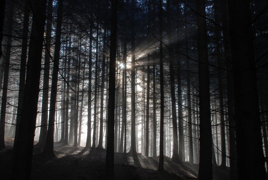 جنگل های وهم انگیز و مرموز در جهان {hendevaneh.com}{سایتهندوانه}جنگل های وهم انگیز و مرموز در جهان - Black Forest 2 1024x687 - جنگل های وهم انگیز و مرموز در جهان