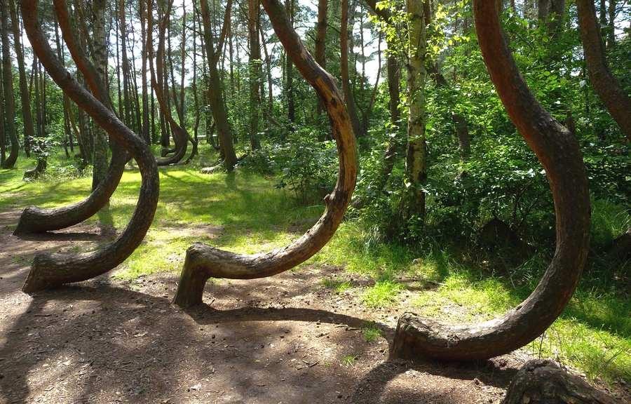 جنگل های وهم انگیز و مرموز در جهان {hendevaneh.com}{سایتهندوانه}جنگل های وهم انگیز و مرموز در جهان - Crooked Forest Poland 2 - جنگل های وهم انگیز و مرموز در جهان