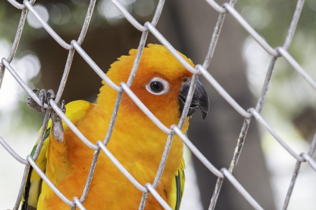 قفس پرندگان در بازار شناور پاتایا