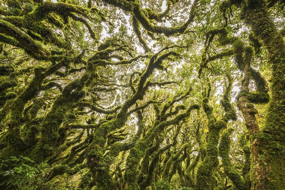 جنگل های وهم انگیز و مرموز در جهان {hendevaneh.com}{سایتهندوانه}جنگل های وهم انگیز و مرموز در جهان - Goblin Forest New Zealand - جنگل های وهم انگیز و مرموز در جهان