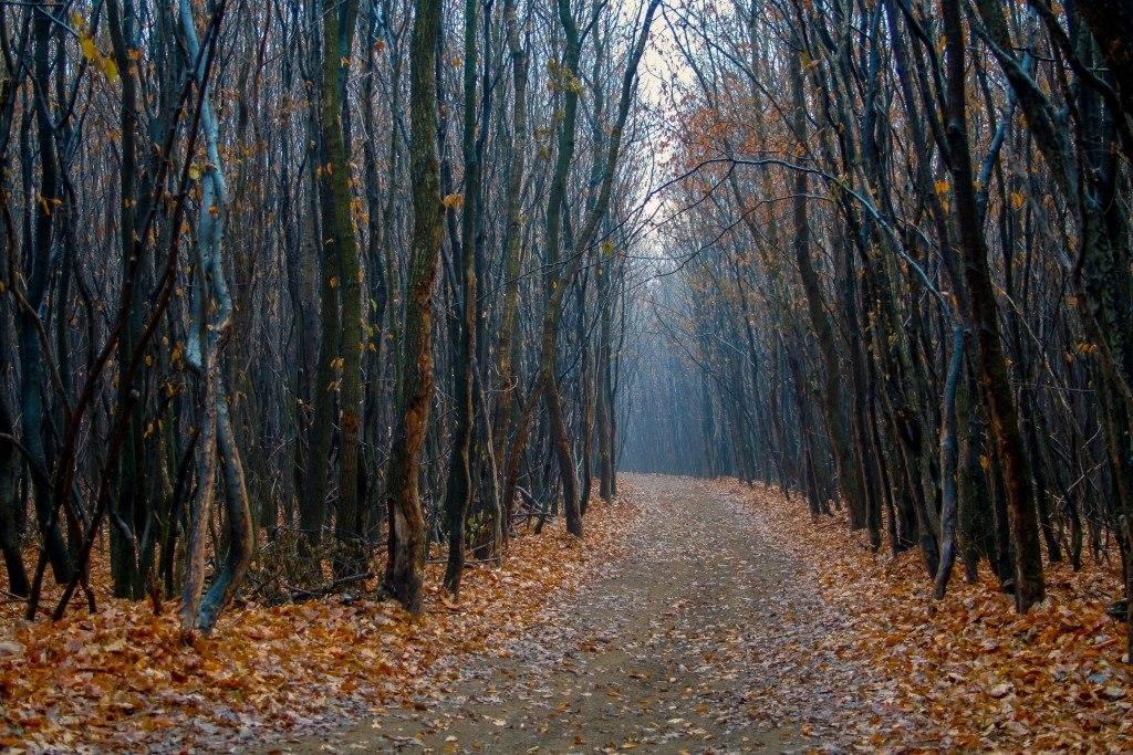 جنگل های وهم انگیز و مرموز در جهان {hendevaneh.com}{سایتهندوانه}جنگل های وهم انگیز و مرموز در جهان - Hoia Baciu Forest 1024x683 - جنگل های وهم انگیز و مرموز در جهان