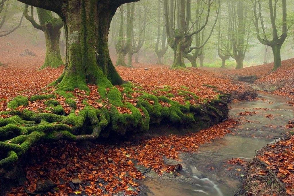 جنگل های وهم انگیز و مرموز در جهان {hendevaneh.com}{سایتهندوانه}جنگل های وهم انگیز و مرموز در جهان - Otzarreta Forest 1024x683 - جنگل های وهم انگیز و مرموز در جهان