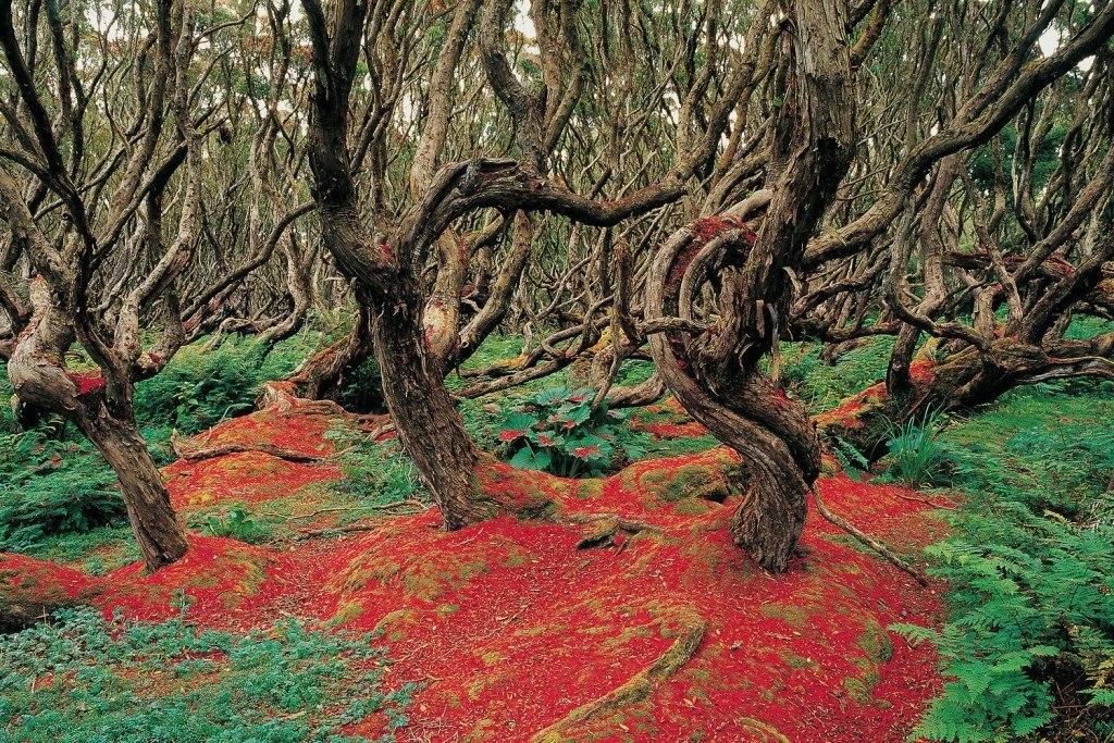 جنگل های وهم انگیز و مرموز در جهان {hendevaneh.com}{سایتهندوانه}جنگل های وهم انگیز و مرموز در جهان - Rata Forest New Zealand 1024x683 - جنگل های وهم انگیز و مرموز در جهان