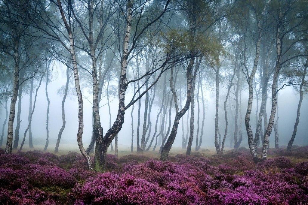 جنگل های وهم انگیز و مرموز در جهان {hendevaneh.com}{سایتهندوانه}جنگل های وهم انگیز و مرموز در جهان - Stanton Moor 1024x683 - جنگل های وهم انگیز و مرموز در جهان
