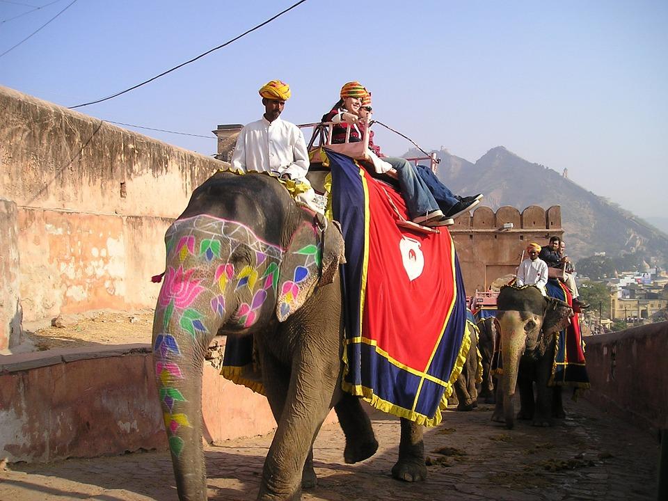 فیل ها در ساحل عاج