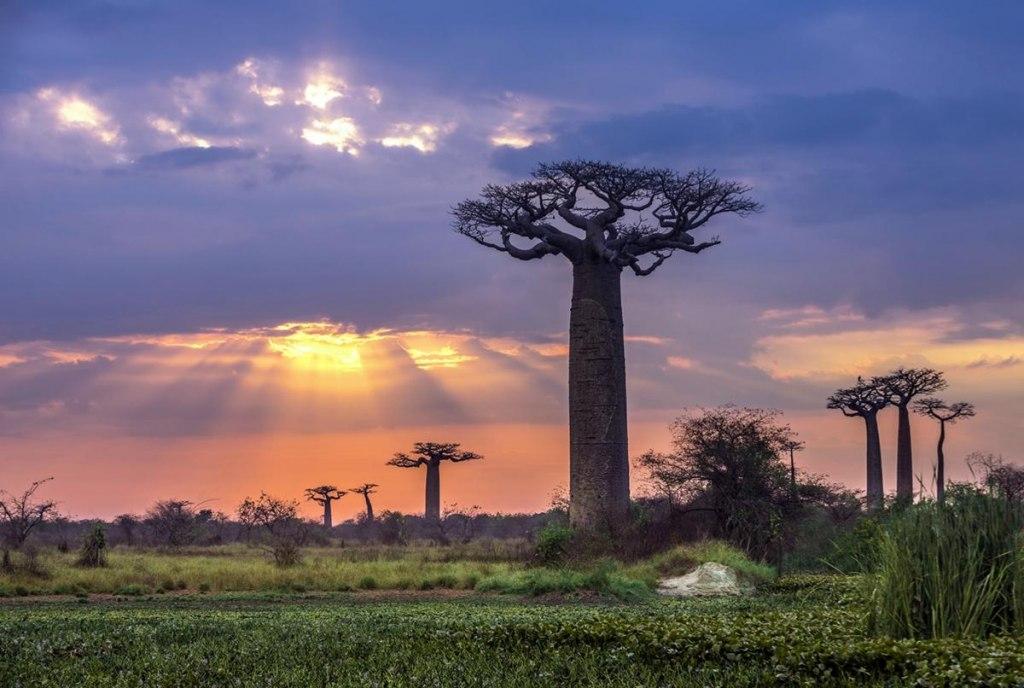 آب و هوا و شرایط اقلیمی ماداگاسکار