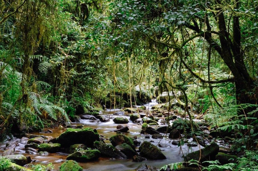 پارک ملی Ranomafana
