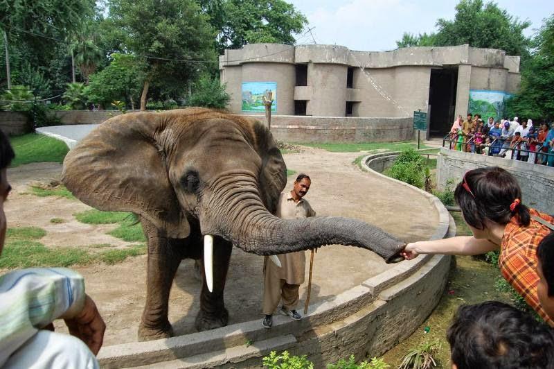 باغ وحش لاهور | Lahore Zoo