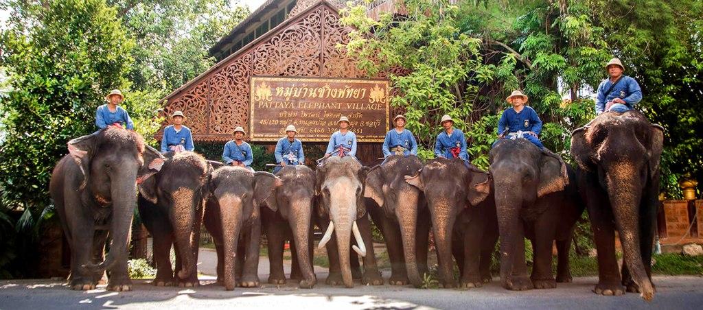 دهکده فیل های پاتایا، تجربه ای به یاد ماندنی