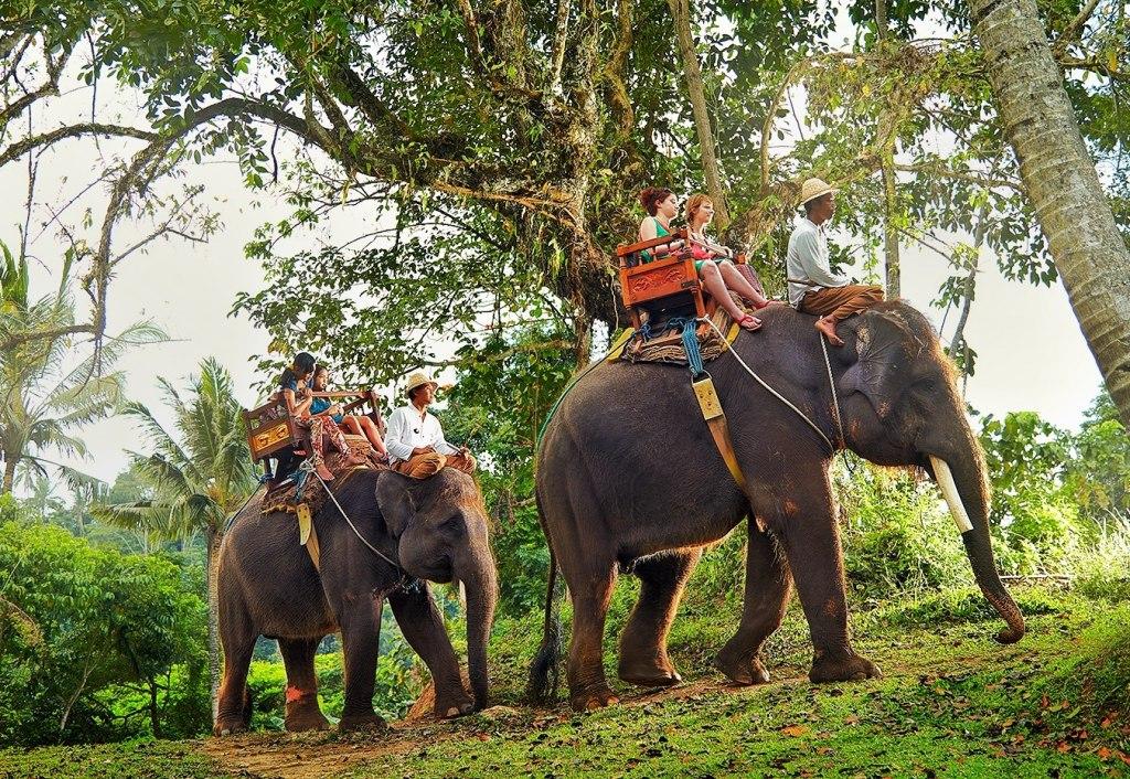 سرگرمی های دهکده فیل های پاتایا