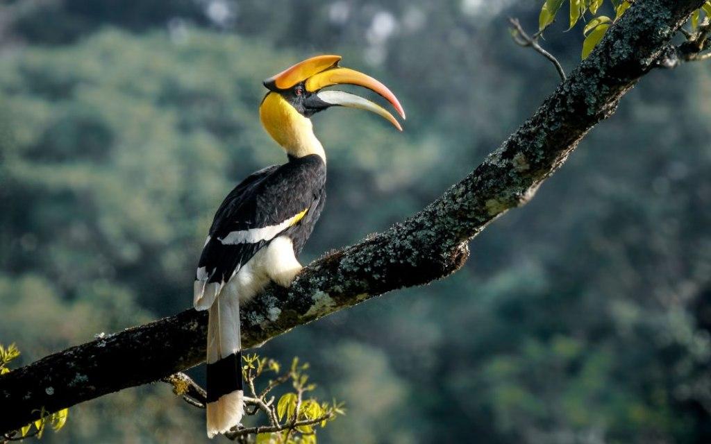 ساراواک سرزمین پرندگان هورنبیل