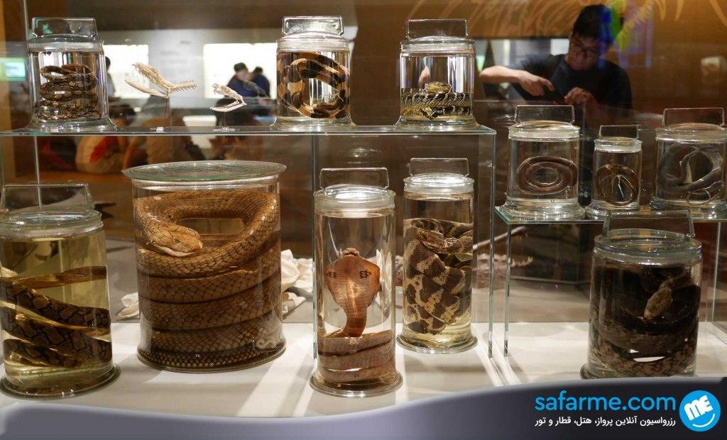 موزه تاریخ طبیعی لی کونگ چیان | Lee Kong Chian Natural History Museum