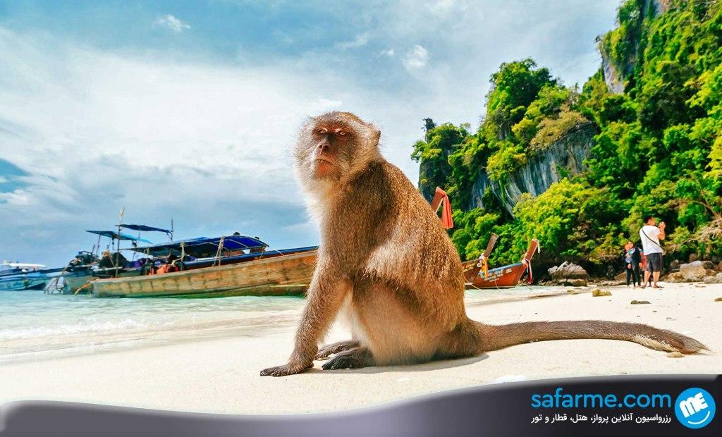 جزایر میمون مالزی