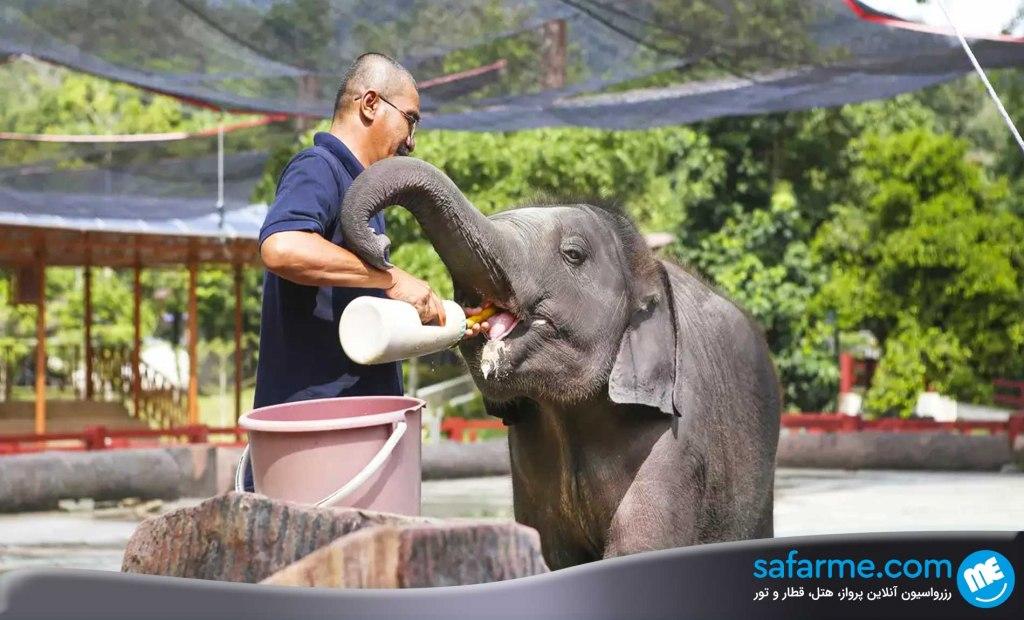 مرکز ملی حفاظت از فیل ها