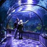 آکواریوم پوکت و ماهی های رنگارنگ تایلندی
