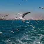 سفر به جزایر پرنس (Prince Islands) استانبول را تجربه کنید!